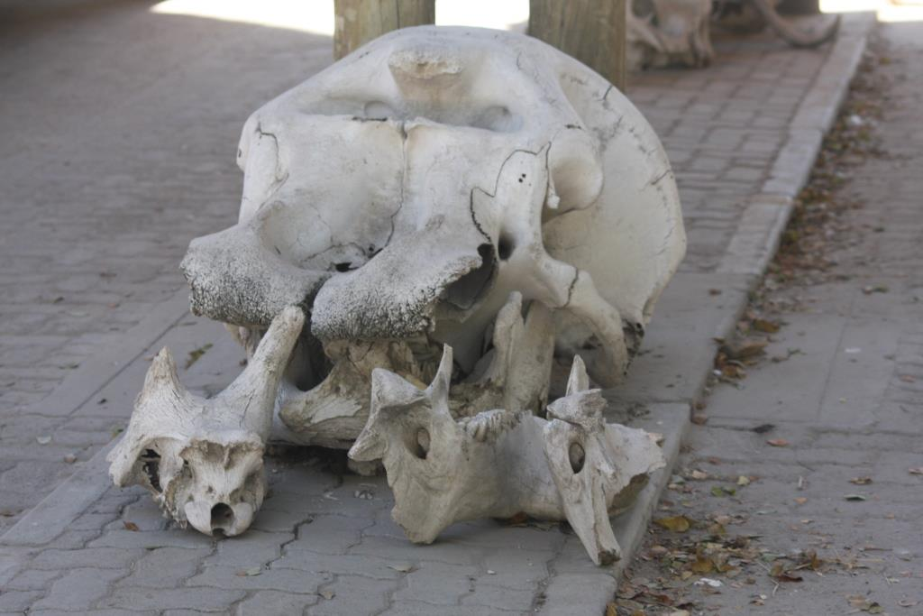 Bots bones at Moremi entrance lunasonline