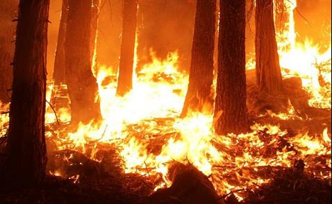 amazon on fire rtt news lunasonline