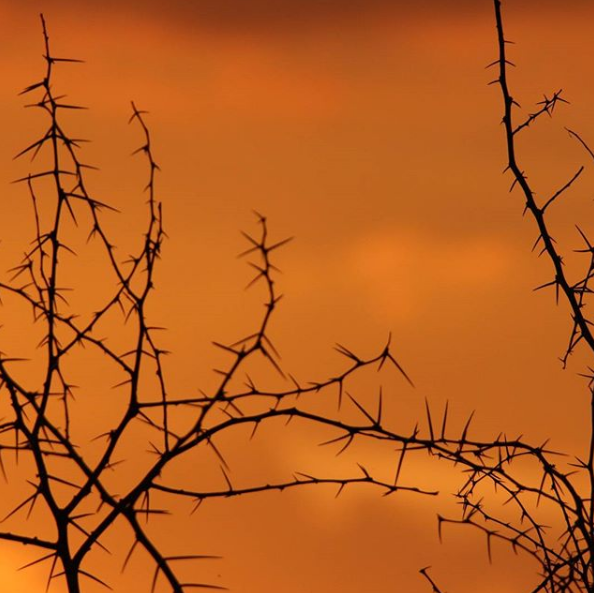 Thorns - Sunset in the Lowveld by Nigel Whitehead