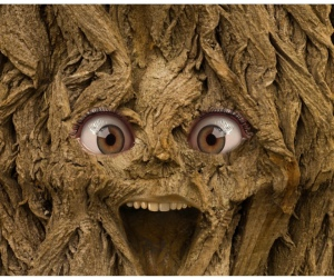 For visually challenged reader, the picture shows a tree with humans face, eyes open wide and an open mouth, either in smile or scream