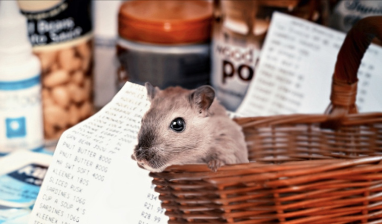 The image shows a tiny mouse sitting in a wicker basket. There are a couple of grocery lists and some dry pantry items in the background.