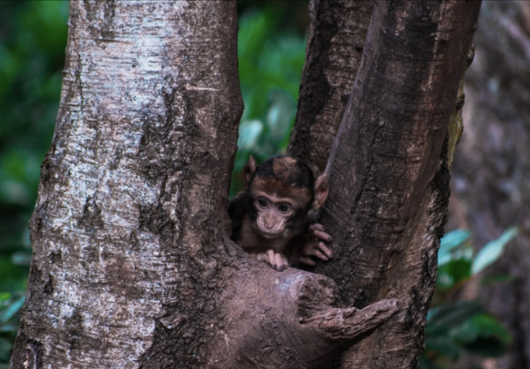 The image shows a baby monkey looking down from branches of a tree.