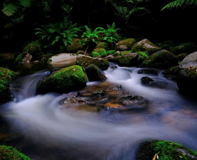 The image shows a natural pool fed with streams. There is a mist on its surface and there are green moss covered rocks surrounding it.