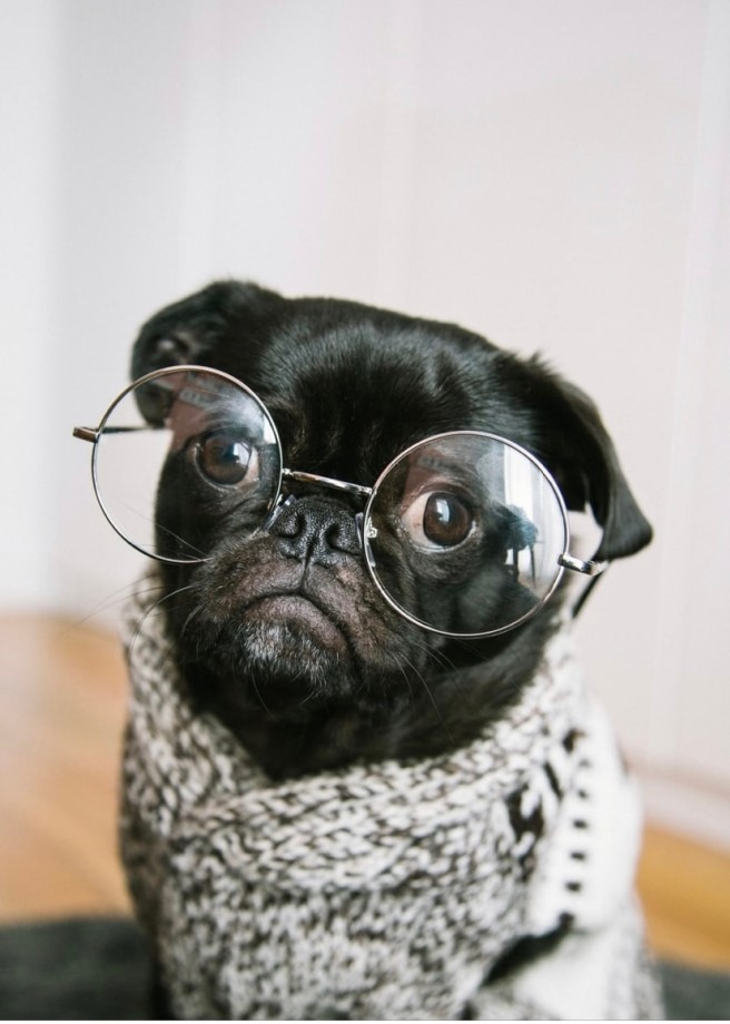 The image shows a dog dressed in a woolen sweater and wearing round wire-rimmed glasses, staring seriously at the camera.